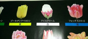 アイスクリーム チューリップ