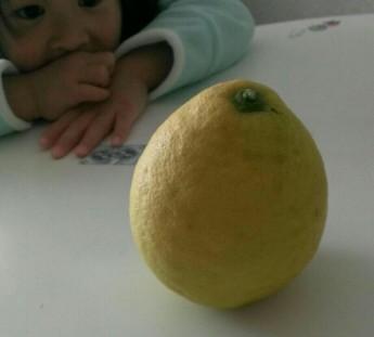 ジャンボレモン?の大実レモンは自家結実らしいです 1本植えでも可という事ですね