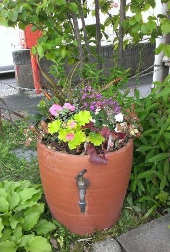 緑化まつりの苗を使って寄せ植えを作成してみました。