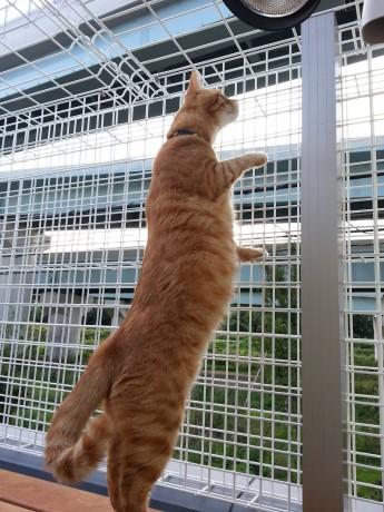外を眺めている猫ちゃん
