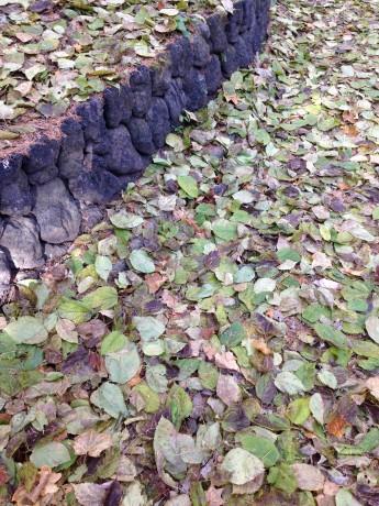 紅葉した木々から落ちた葉が複雑な色合いの絨毯を作っています