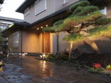 玄関横に植えられた大きなアカマツがライトアップされた和風のアプローチ