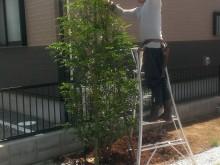 植栽 支柱立て
