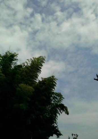 アトラスホームの上空
