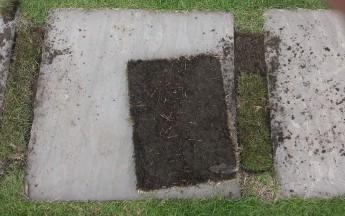 芝の裏側はこんな状態 根が伸びてどんどん広がっていくのでカッとしても平気なのです