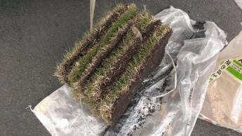 売られている芝はこのような状態 これをカットして芝を張ります