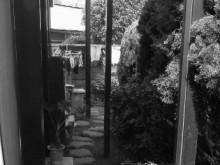 植栽に覆われ暗くなっていた裏庭