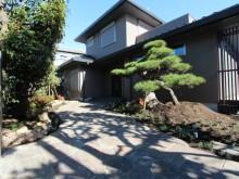 和モダンの住宅に合わせて自然石を使った和風の玄関廻りを 立派なアカマツが映えます