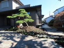 和風の住宅のお庭に大きな赤松をシンボルツリーとしました。