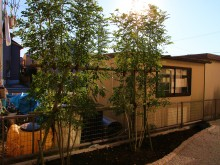 横浜市 庭の施工事例 砂利敷きにピンコロ縁取りの植栽スペース シマトネリコ