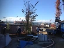 シンボルツリーなどの樹木搬入中 樹高が高いのでその分根鉢も重いのです