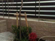 アプローチを辿ると和風の植栽スペースが見えてきます