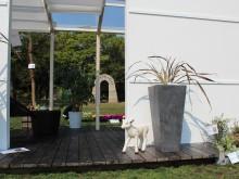 縦長の鉢はタカショーのポリテラゾ 葉の広がるニューサイランの植栽が似合います