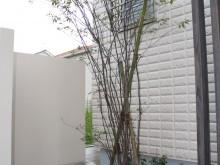 神奈川県秦野市 門袖横の植栽 ハイノキの足元にスポットライトで夜間も空間を盛り上げます