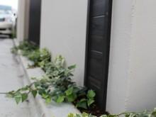 神奈川県秦野市 塗り壁の門袖にアクセントをつけて 足元にアイビーを植栽