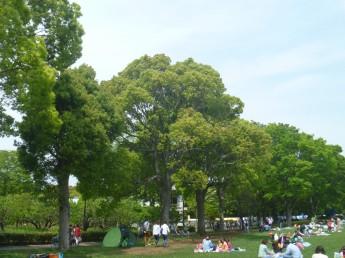 くすのき 平塚市民の木