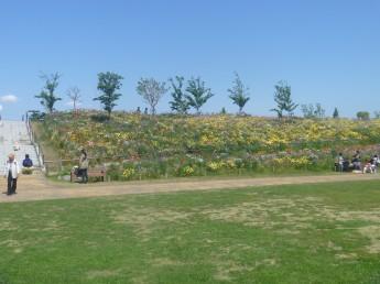 斜面の花たち